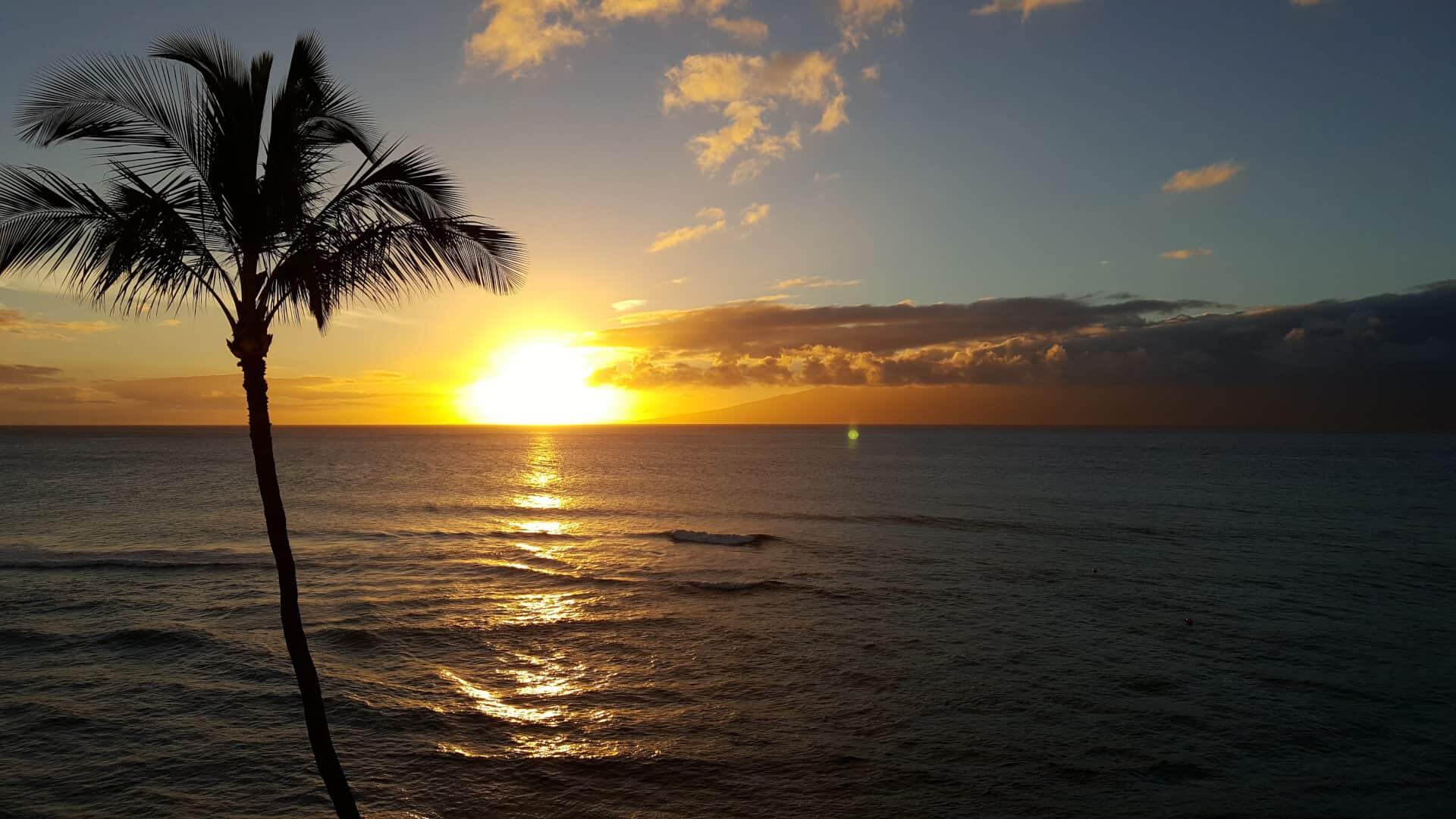 Palm-Tree-Beach3
